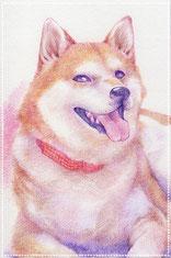 色鉛筆似顔絵 写実 リアル 犬