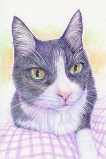 色鉛筆画 リアル 猫 モフモフ