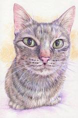色鉛筆画 猫 もひもふ
