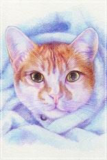 色鉛筆似顔絵 写実 リアル 猫