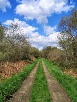 典型的な東クレアの田舎道。こんな道を延々と歩きます。