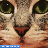 cat domestication ancient DNA aDNA
