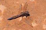 Dragonfly   Portugal