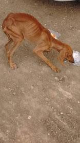 eine verhungerte Straßenhündin vor der Buchandlung in Alexandroupolis