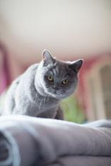 Katze Chillabell (Foto: E.S.)