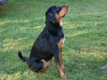 Gasthund Rosi