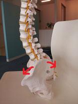 MRIで異常のない腰痛の原因
