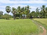 Countryside, little Village, Cambodia