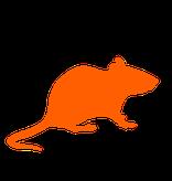 eliminación de ratas y ratones