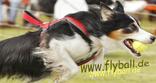 www.flyball.de