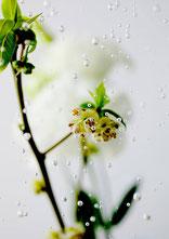 気泡《絶景》[0311_1757] 2013-20 ラムダプリント (ed.1/1) 289 × 204 mm