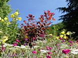 Prairie fleurie, Jardins jolis