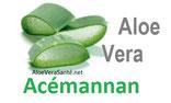 L'Acemannan est un polysaccharide capable d'augmenter de dix fois plus l'activité des macrophages qui détruisent les toxines et les tumeurs.