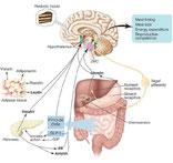 los secretos de un cuerpo saludable