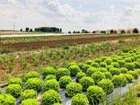 Changement climatique et agriculture, quels effets ?