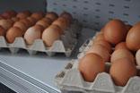 Eier von Freilandhühner