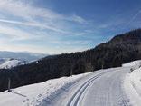 Panoramaspur Langlaufzentrum Hohtann-Belchen