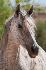Rescue horse called Selena