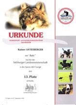 Agility-Landesmeisterschaft am 27. Sep. 2008 beim Verein Hundesport und Ausbildungszentrum Seenregion in Abersee