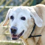 Hund Jack: Erfolgreich vermittelt von Pechpfoten e.V.