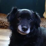Hund Robby: Erfolgreich vermittelt vom Wuppertaler Tierschutzverein Pechpfoten e.V.