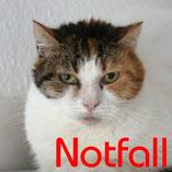 Notfall! Katze Penny wurde lange Zeit misshandelt und sucht über den Tierschutzverein Pechpfoten e.V. geduldige, fürsorgliche Menschen