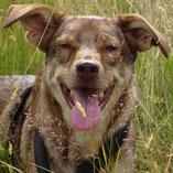 Nach neun Monaten auf einer Pflegestelle hat Aladin über den Wuppertaler Tierschutzverein Pechpfoten e.V. ein tolles Zuhause gefunden.