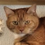 Katze Pablo: vermittel von Pechpfoten