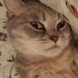 Katze Nelly sucht über den Tierschutzverein Pechpfoten e.V. Wuppertal ein neues Zuhause