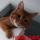 Kater Loki erfolgreich vermittelt über den Tierschutzverein Pechpfoten e.V. in Wuppertal