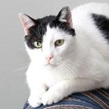 Tierschutzverein Pechpfoten e.V. sucht für Katze Emma ein neues Zuhause