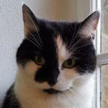 Katze Paula hat über den Verein Pechpfoten e.V. ein neues Zuhause gefunden