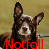 Hund Gismo (6 Jahre) sucht ein neues Zuhause - Wuppertal
