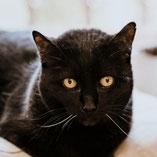 schwarze Katze Tippy: über Pechpfoten e.V. ein neues Zuhause gefunden