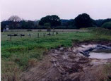 Sumpfzone im angrenzenden Schilfbereich