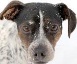 Le chien est un être sensible ?