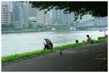 東京写真船のある風景