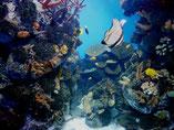 экскурсии в аквариум Барселоны