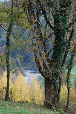chant des oiseaux, rivière à 300m