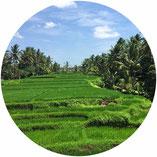Bali Reisebericht und Highlights für euren Urlaub. Von Ubud nach Kuta & Canggu und dann nach Uluwatu.