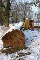 Vom Sturm gefällt (2009), Bild: Edeltraud Spee
