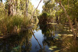Bitter Springs, Reisebericht Australien