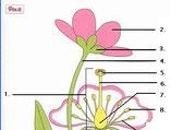 delen van een plant (oef.)