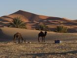 circuit aux dunes de merzouga