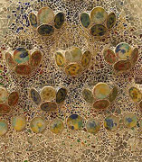 Mosaique - Park Guell - Barcelone