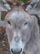Esel im Wendland, Jessy