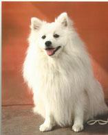 Bailey 1 Jahr alt