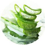 Aloe vera Forever Living Products in Naturheiilpraxis Voglreiter