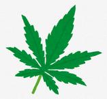 大麻が喘息やガンに効果的なことを知る
