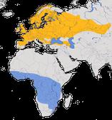 Karte zur Verbreitung der Gartengrasmücke (Sylvia borin)